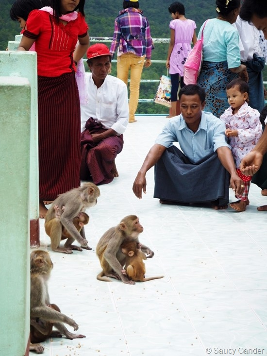 Myanmar-Popa-7